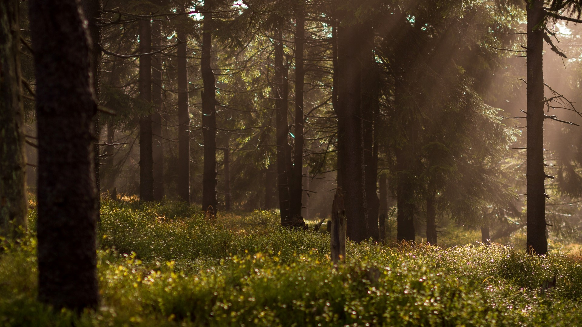 natuurbegraafplaats-weverslo-bomen